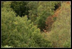 Cerf dans les Gorges de la Truyère - Copyright - Vincent Salabura