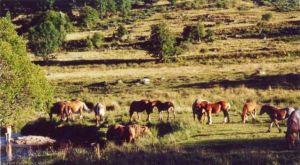 Un troupeau bien paisible