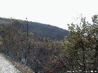 Incendie sur le Méjean - Laurent COLLET pour AMILO