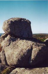 chien cerbère ou ours de pierre