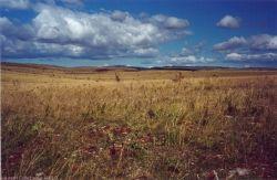Sur les terres arides...