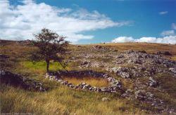 Les pierres éparses s'assemblent à l'ombre d'un arbre